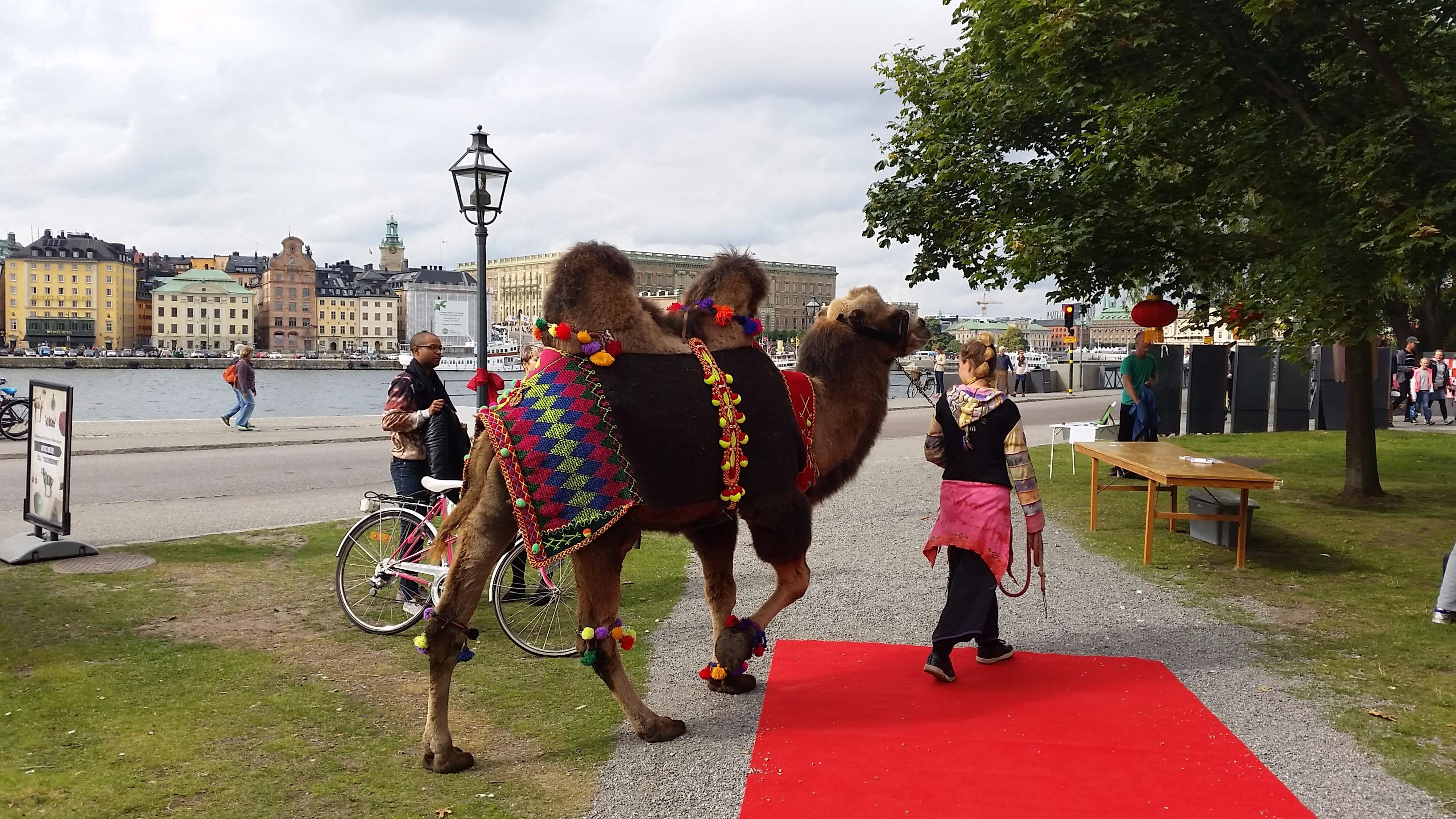 En kamel är mer än ett djur